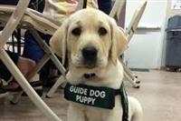 Guide Dog Training Centre